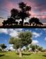 lo stesso uliveto fotografato nella stessa giornata, in due momenti diversi e da due altezze diverse. Tenuta Venterra, Grottaglie (TA) - 2013